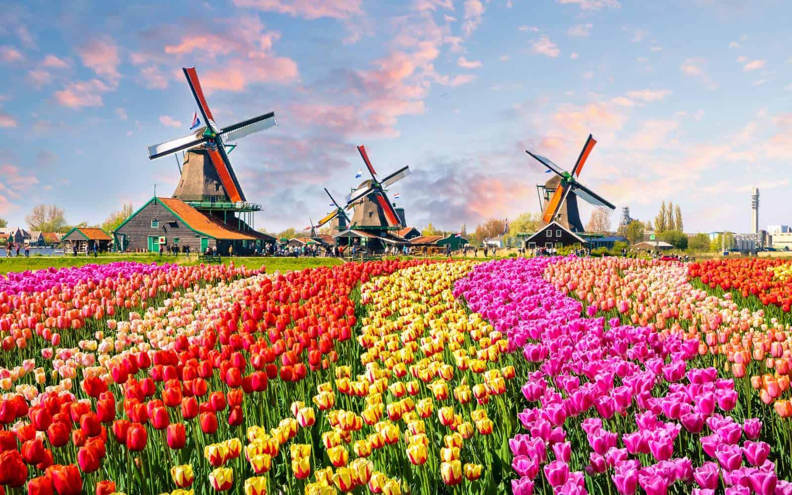 Offerte lavoro in Olanda